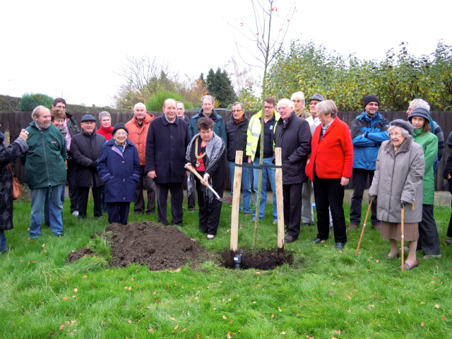 Lesley Avenue tree planting